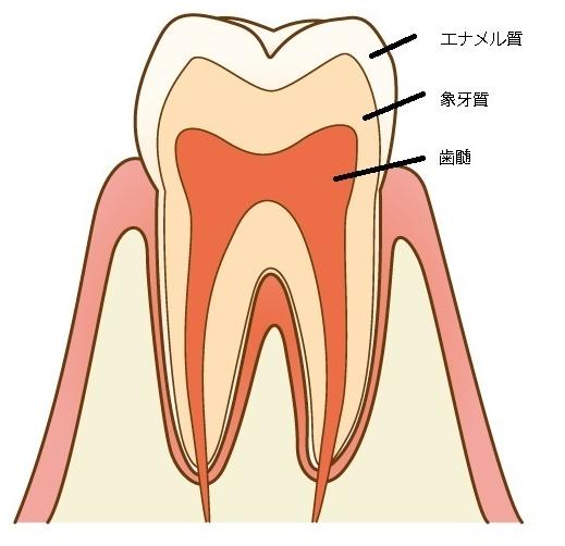 歯ってどのくらい硬いの?